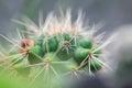 Cactus macro shot mini closeup Stock Photos