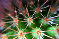 Cactus macro this is a of spines with water drops Royalty Free Stock Images