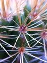 Cactus macro taken on iphone Stock Images