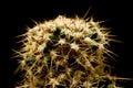 Cactus a macroistruzione Immagini Stock Libere da Diritti