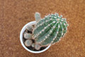 Cactus nature flower plant pot Royalty Free Stock Image