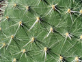 Cactus needles Stock Photos