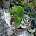 stock image of  Cactus