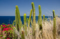 Cactus on the ocean's shore Stock Image