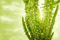 Cactus opposite the sun Royalty Free Stock Image