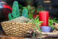 Cactus photo of little plant in a flower shop Stock Photography