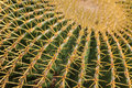 Cactus plant close up view with needles Stock Images