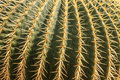 Cactus plant close up view with needles Stock Photo