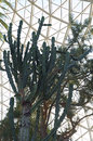 Cactus Plant at Conservatory Royalty Free Stock Photo