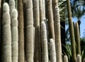 Cactus plants Stock Image