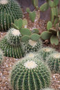 Cactus plants Stock Photo