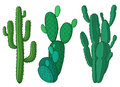 Cactus plants vector illustration