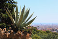 Cactus in the rocks green closeup sweltering july day on background of catalan capital of barcelona Stock Photos