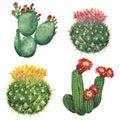 Cactus set Royalty Free Stock Photo
