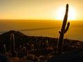 Cactus Silhouette In Sunrise O...
