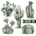 Cactus sketch set different shapes desert and domestic isolated vector illustration Stock Photos