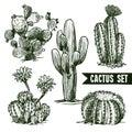 Cactus Sketch Set Royalty Free Stock Photo