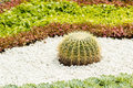 Cactus small ball shaped with sharp spines in flower garden Stock Photo