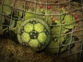 Cactus Soccer Ball Royalty Free Stock Images