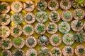 Cactus species. Stock Photos