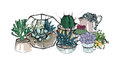 Cactus and succulents composition. Collection plants in pots, florarium. Colorful vector hand drawn illustration in
