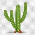 Cactus tree on transparent background