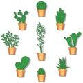 Cactus vector illustration. Hand drawn colorful cactus set.