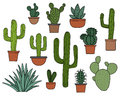 Cactus vector set, hand drawn collection of various succulents and cacti