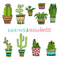 Cactuse and succulent hand drawn set. Doodle florals in pots. Vector colorful cute interior plants Royalty Free Stock Photo
