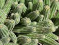 Cactuses many green without background Stock Images