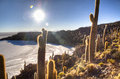 Cactuses at the saltflates salt flates of uyuni bolivia Royalty Free Stock Photos