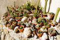Cactuses' still life Royalty Free Stock Photo