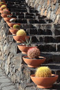 Cactuses at the volcanic steps Royalty Free Stock Images