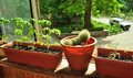 Cactuses on the windowsill and plants Royalty Free Stock Photo