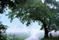 Cades Cove fog over Sparks Lane. Royalty Free Stock Photo