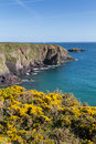 Caerfai bay pembrokeshire west wales uk st brides near st davids and in the coast national park the coast path Royalty Free Stock Photos
