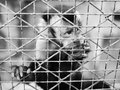 The animal life in the cage Royalty Free Stock Photo