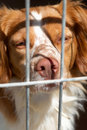 Caged dog Royalty Free Stock Image