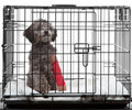 Caged dog with broken leg Royalty Free Stock Photo