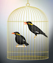 Caged myna birds Royalty Free Stock Photography