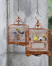 Caged song birds Royalty Free Stock Photo