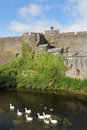 Cahir castle gooses detail of with in the river ireland Royalty Free Stock Image