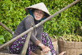 Cai rang floating market can tho vietnam july unidentified woman at in can tho vietnam on july is the biggest Royalty Free Stock Photo
