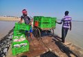 image photo : Fishermen loads fish boxes on the shore