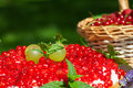 Cake with red currants a and grapes on top Royalty Free Stock Photos