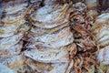 Calamar secado Fotos de archivo
