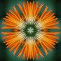 Calendula flower mandala