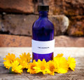 Calendula oil in blue glass bottle Royalty Free Stock Images