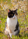 Calico cat in sun with spring flowers Royalty Free Stock Photography