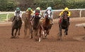 California chrome wins the san pasqual stakes arcadia ca january jockey victor espinoza pilots horse of year gray mask to victory Stock Photos